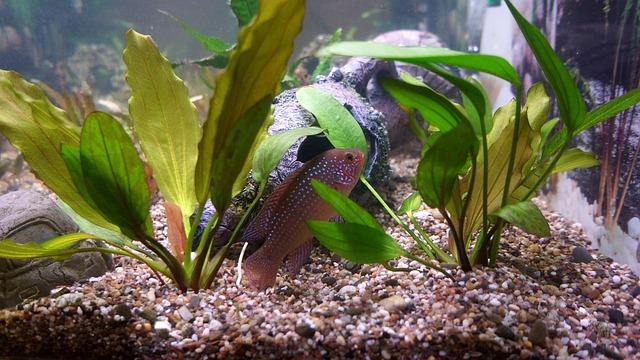 akvarijní ryby v akváriu